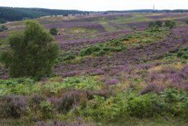 Cannock Chase heathland