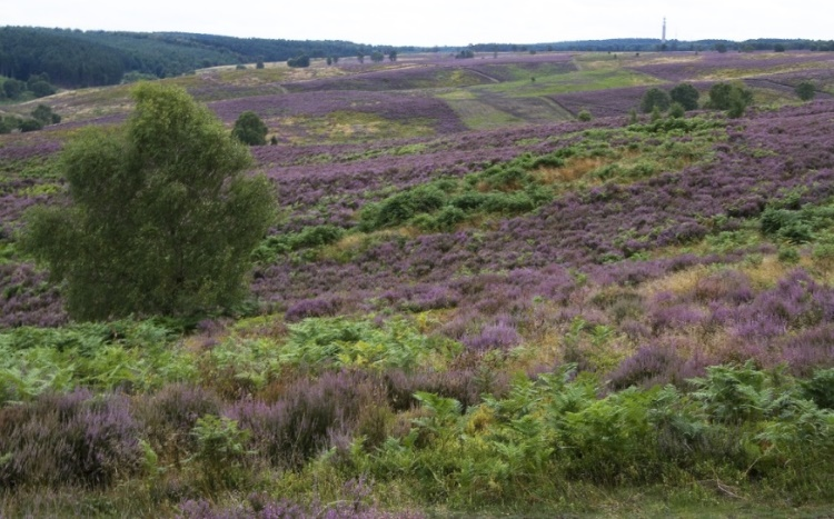 Managing Cannock Chase – latest update